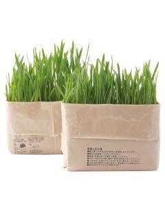 無印良品 猫草栽培セット 2個入